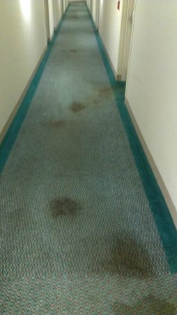 Extended Stay America - Detroit - Madison Heights: Hallway from 2nd floor (trash juice dragged across the floor)