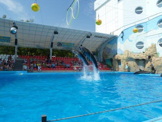 Odessa Delphinarium Nemo: Одесса, в дельфинарии Немо