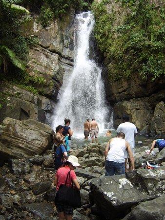 The El Yunque Rain Forest: el yunque