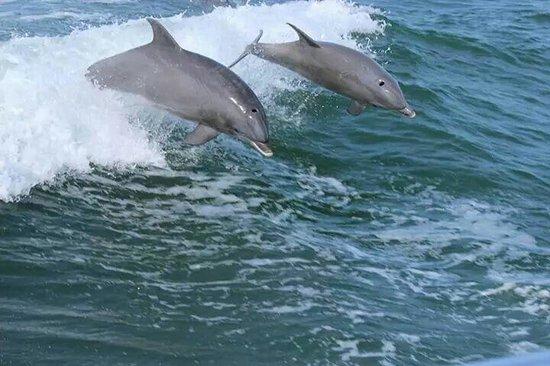 Thundercat Dolphin Watch: Thundercat trip