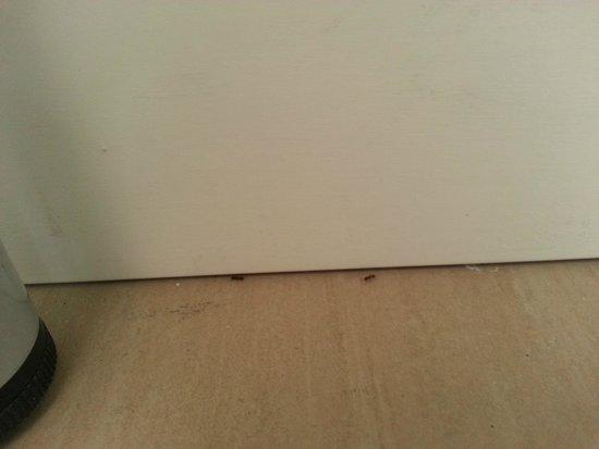 City of Art Venice Lloyd: Des fourmis dans la chambre