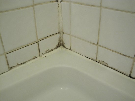 Cromwell Lodge : Mould in the shower, which was very inconvenient to use