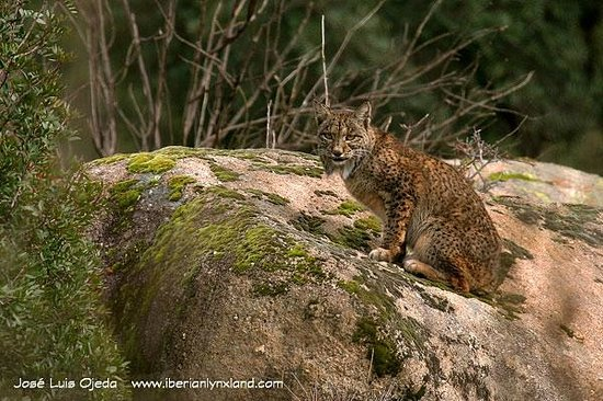 Iberian Lynx Land - Day Tours (Andujar) - 2019 All You Need