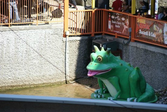 Camden on the Lake Resort: The Toad