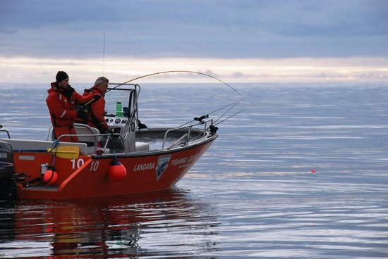 Your catch is expertly prepared for shipment home flash for Langara fishing lodge