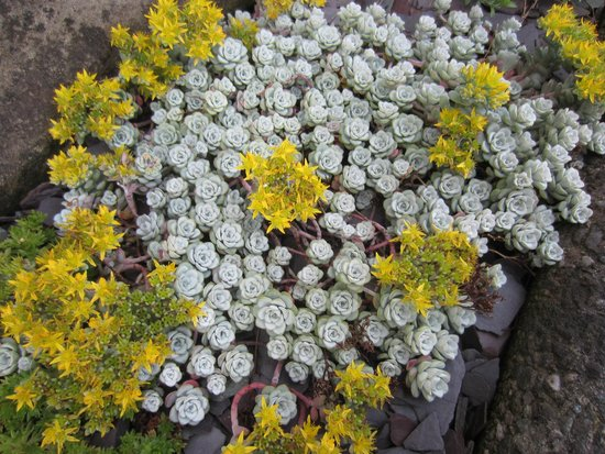 Cressington B&B: Beautiful flowers