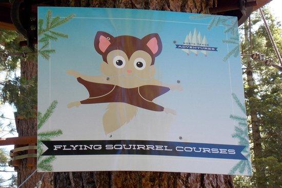 Tahoe Treetop Adventure Park : Flying Squirrel