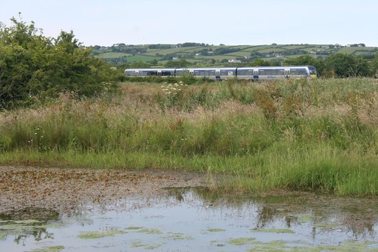 Diamond Jubilee Wood: The pond, Larne line train.