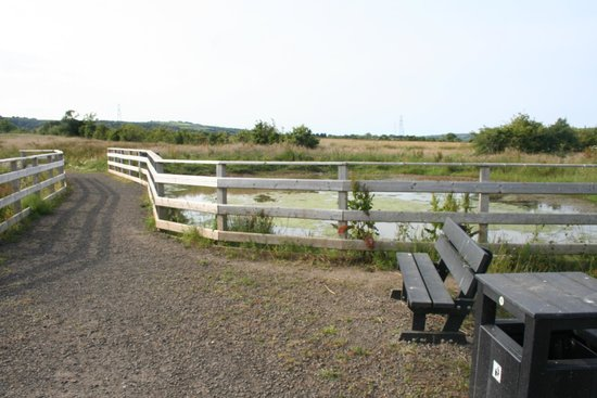 Diamond Jubilee Wood: You can watch all the bugs and birds at the pond.