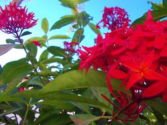 BEST WESTERN Tamarindo Vista Villas: flowers