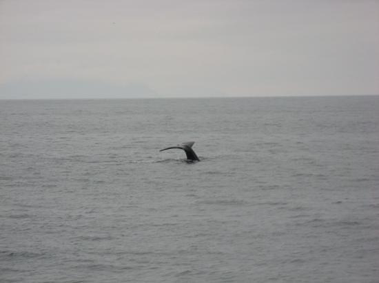 Kenai Fjords Tours: Humpback whale