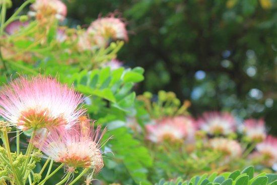 Moanalua Gardens Park