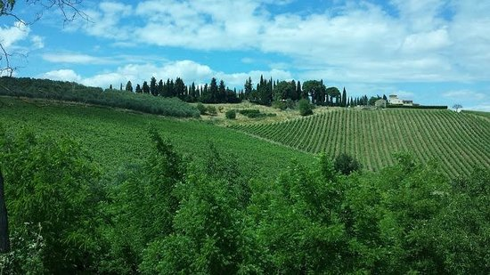 Tuscan Wine Tours with Angie : Tuscany