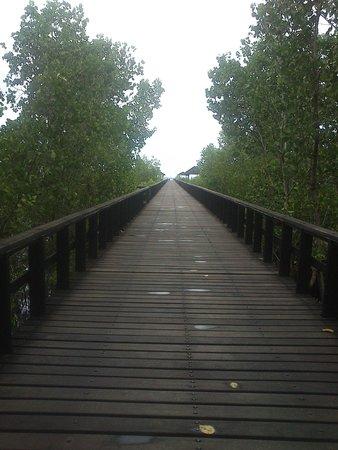 โรงแรมซานติกาพรีเมียซีไซด์รีสอร์ทมานาโด: the bridge around mangrove