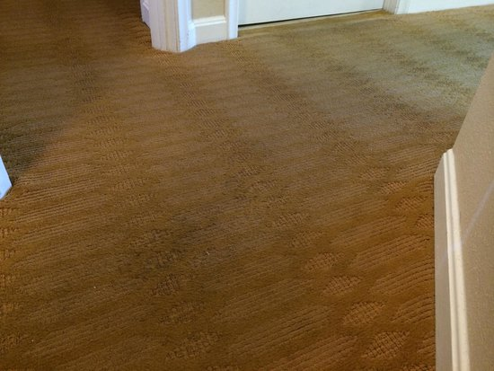 Wyndham Ocean Boulevard: Dirty carpet