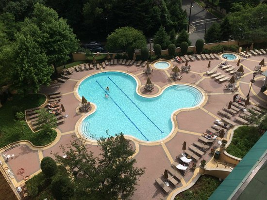 Omni Shoreham Hotel: Pool View