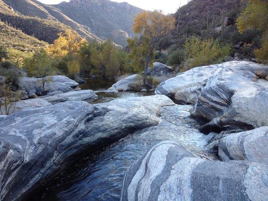 Sabino Canyon : Stop 8