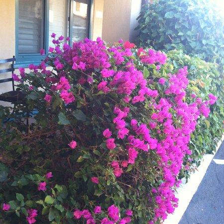 Castillo Inn at the Beach: Mañana con flores