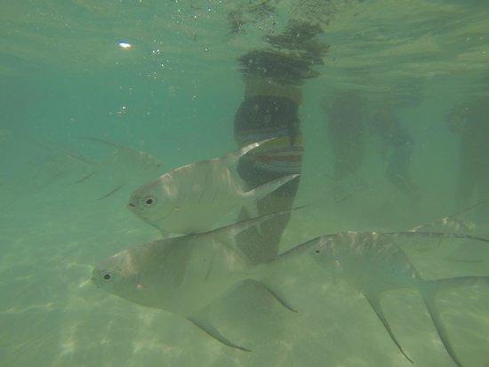 Sandos Playacar Beach Resort : mar !