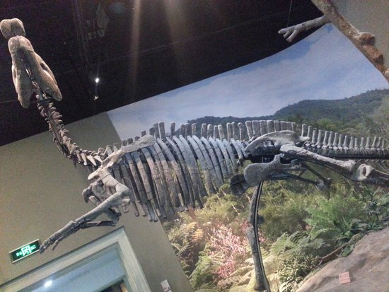 Tianjin Natural History Museum : A great collection!!