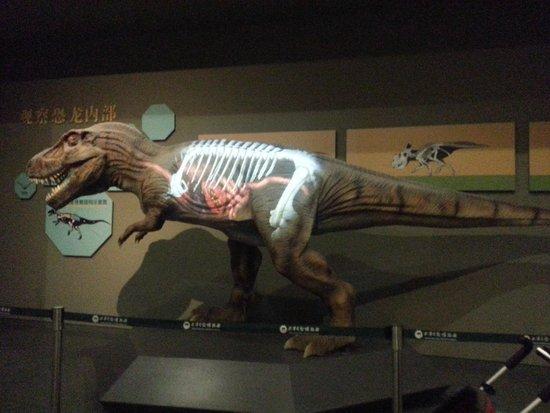 Tianjin Natural History Museum : Great displays!!
