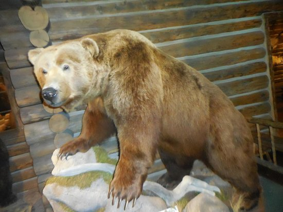 Buffalo Bill Historical Center : Bear