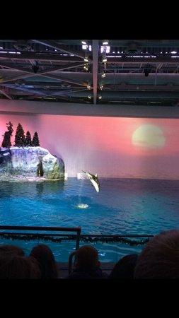Shedd Aquarium: Show muito bonito e educativo.