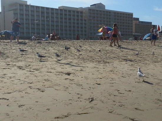 Virginia Beach: Beach with lots of seagulls