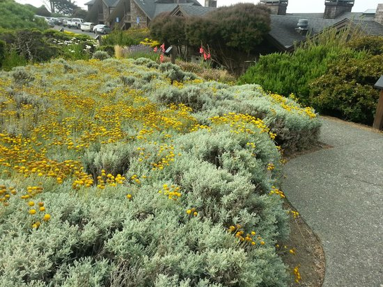 Bodega Bay Lodge: Grounds