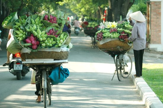Vietnam Great Tours - Day Tours