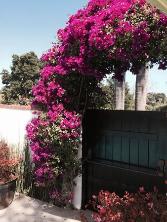 Montecito Inn : Pool area ...