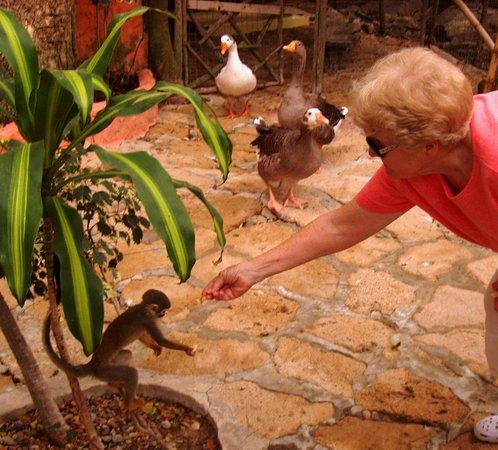Hosteria  Ecologica El Faro: feeding a monkey