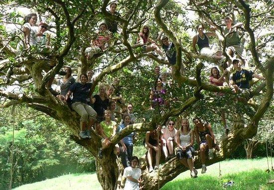 Life Monteverde