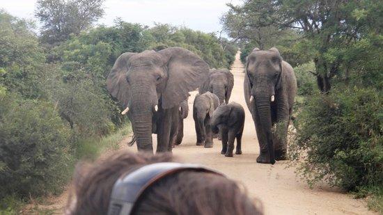 Kapama River Lodge : elefantes