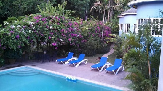The Blue House Boutique Bed & Breakfast: Swimming Pool area
