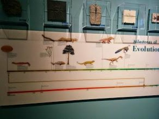Harvard Museum of Natural History : life on earth