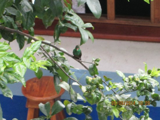 Hotel Los Suenos : hummingbird from my balcony