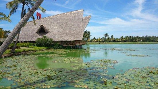 Barcelo Bavaro Palace : В озере плавают местные  уточки))