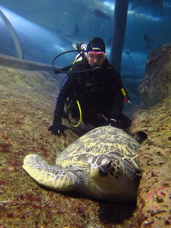 Manly Sea Life Sanctuary - Shark Dive Xtreme : Myrtle the turtle!
