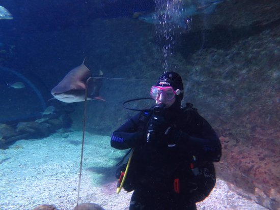Manly Sea Life Sanctuary - Shark Dive Xtreme : Up close and personal