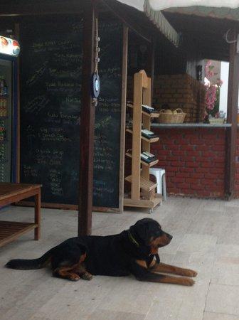 """Dalyan Doga Hotel : """"Asi"""" the friendly dog :)"""
