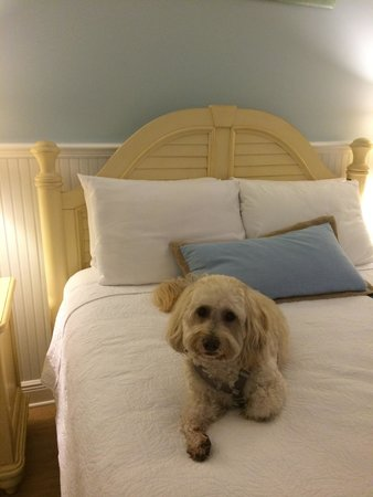 Our dog, Bruce, letting us know he's happy at The Beachside Village Resort!