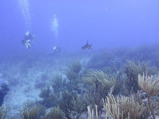 Scuba Fun Dive Center: Reef Shark & Divers