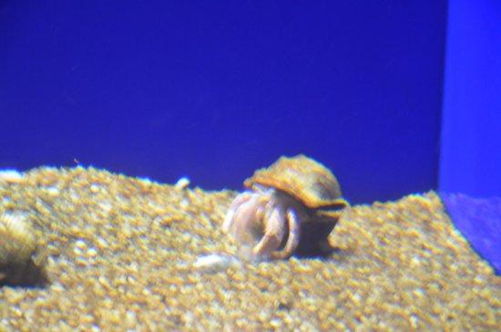Palma Aquarium : bernard