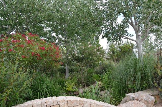 Palma Aquarium : vegetation