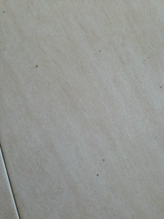 Hotel San Remo : Ants trails on the floor
