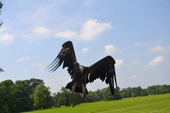 Zamek Lednice: Eagle Show in Lednice