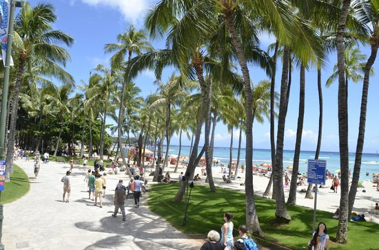 Typical scene of Waikiki beach