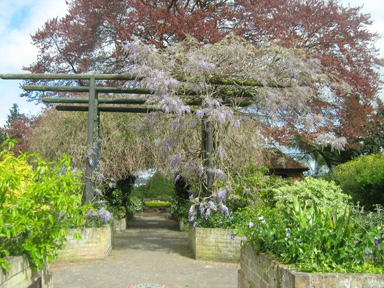 City Sightseeing UK - Colchester: Wisteria in Bloom