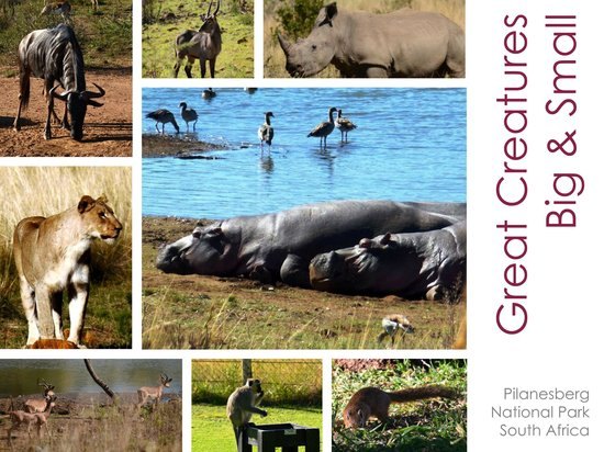 Bakubung Bush Lodge: Great creatures - big & small